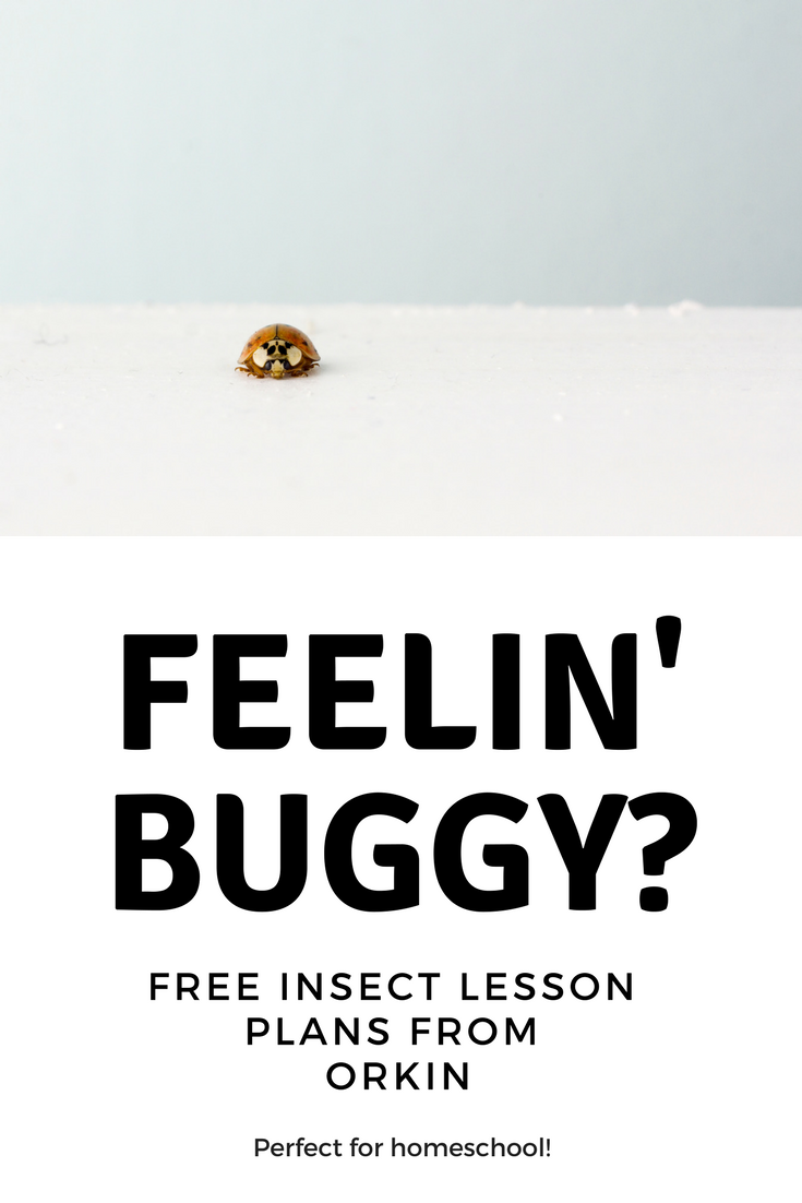 Bug Lesson Plans from Orkin
