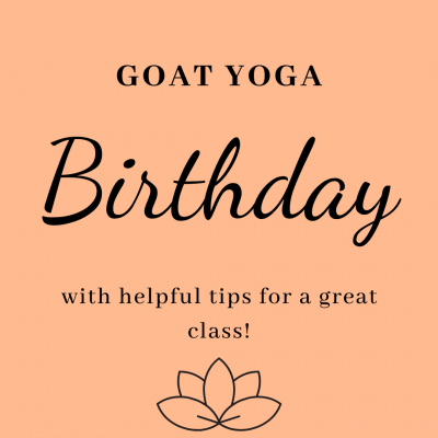 Goat Yoga Birthday with helpful tips for a great class