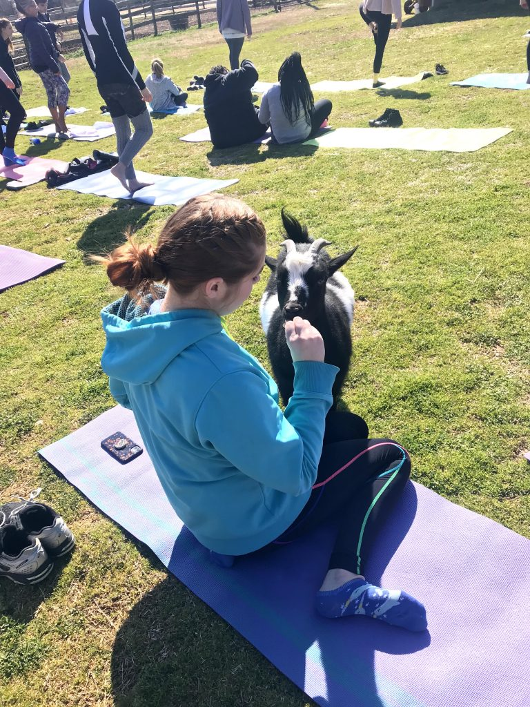 Goat Yoga Birthday with tips for a great class